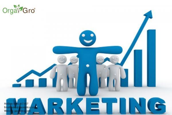 Tuyển dụng 01 nhân viên marketing